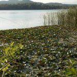 Banyoles, qué hacer en el lago catalán