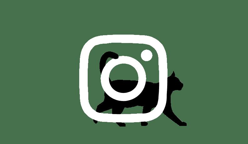 Imagen de red social Instagram